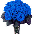 12 Pure Holland Blue Cooling Roses