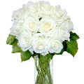 12 Plain White Roses in vase