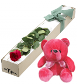 Single Red Rose in Box with Red Bear
