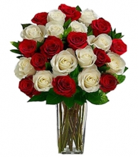 24 Red and White Rose in Vase
