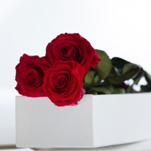 THREE RED ROSES IN A GIFT BOX