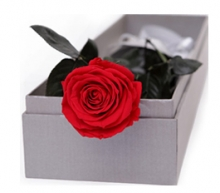 1 pcs. Red Roses in Box
