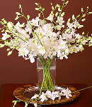 1 Dozen White Orchids in Vase