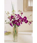 12 Stem Purple Orchids in Vase