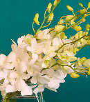 One Dozen White Orchids in a Bouquet