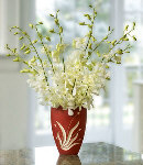 One Dozen White Orchids in a Vase