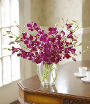 One Dozen Purple Orchids in a Vase