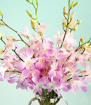 Two Dozen Pink Sprayed Orchids in a Vase