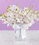Three Dozen White Orchids in a Vase