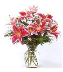 8 pcs star gazer lilies in a vase