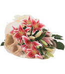 8 pcs Bouquet of Red Stargazer Lilies