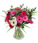 12 pcs Mixed Gerbera in a Vase