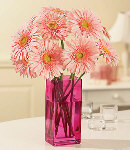 12 pcs Peach Gerbera in a Vase