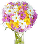 12 pcs Assorted Colors Malaysian Mums in Vase