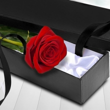 1 pc Red Rose in Box
