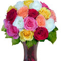 24 Multi Color Roses in Vase