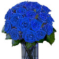 12 Beautiful Holland Blue Roses in Vase