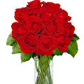 12 Deep Colored Red Beatiful Roses in vase
