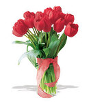 10 pcs. Valentines Red Holland Tulip
