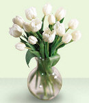 10 pcs. Valentines White Holland Tulip
