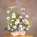 Basket of white daisy w/yellow flower