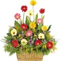 Touch Gerbera in a Basket