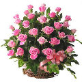 3 dozen fresh pink roses in basket