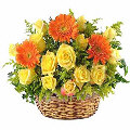 2 dozen fresh yellow roses in basket