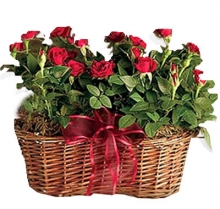 X-mas Red Rose Basket Gifts