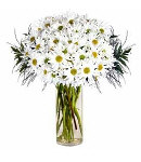 White Daisies in Vase