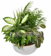 Mix Green Plant in Basket