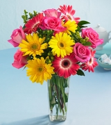 6 Pink Roses with Gerbera in Vase