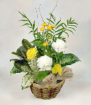 Mix Flower and Green Plant Basket