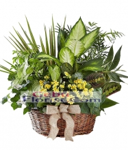 Assorted Green Plant in Basket