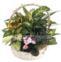 Mix Plant Basket