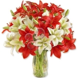 Red and White Lillies