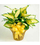 Yellow Bright Plant in Basket