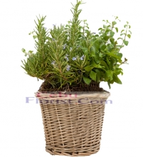 Assorted Herb Garden Plant