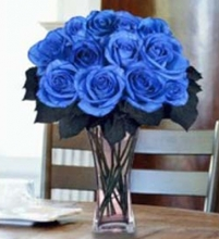 12 Imported Holland Blue Roses in Vase