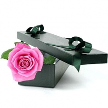 Single Pink Rose in Box