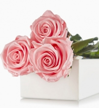Three Pink Roses in a Box