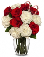 Christmas Red & White Roses in Vase