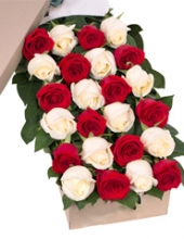 24 Red and White Roses in Box