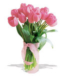 10 pcs. Pink Holland Tulip