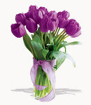 10 pcs. Violet Holland Tulip