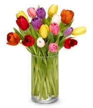 12 pcs mixed multicolor tulips in vase