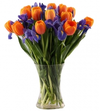 12 Holland Fresh Peach Tulips in a Glass Vase
