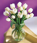 12 Holland Fresh White Tulips in a Glass Vase
