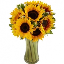1 Dozen Sunflowers in Vase