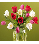 12 pcs mixed multicolor tulips in glass vase